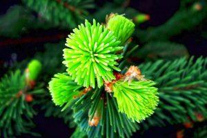 amazing flowers green