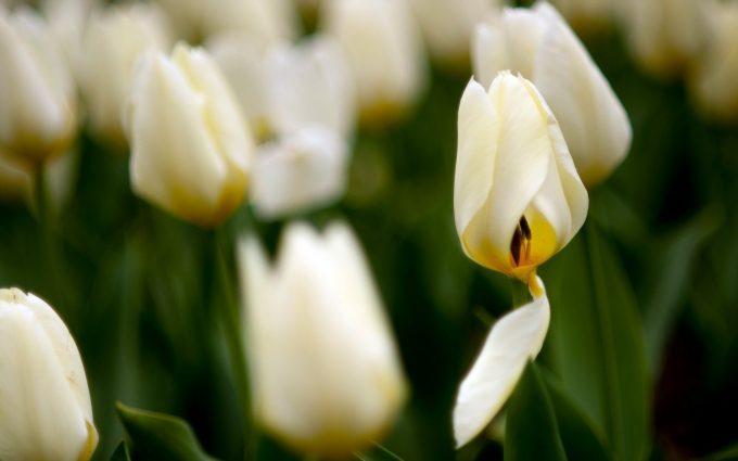amazing flowers images