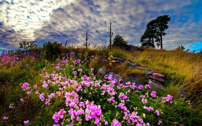 amazing flowers meadow