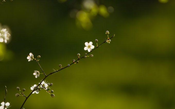 amazing flowers nature