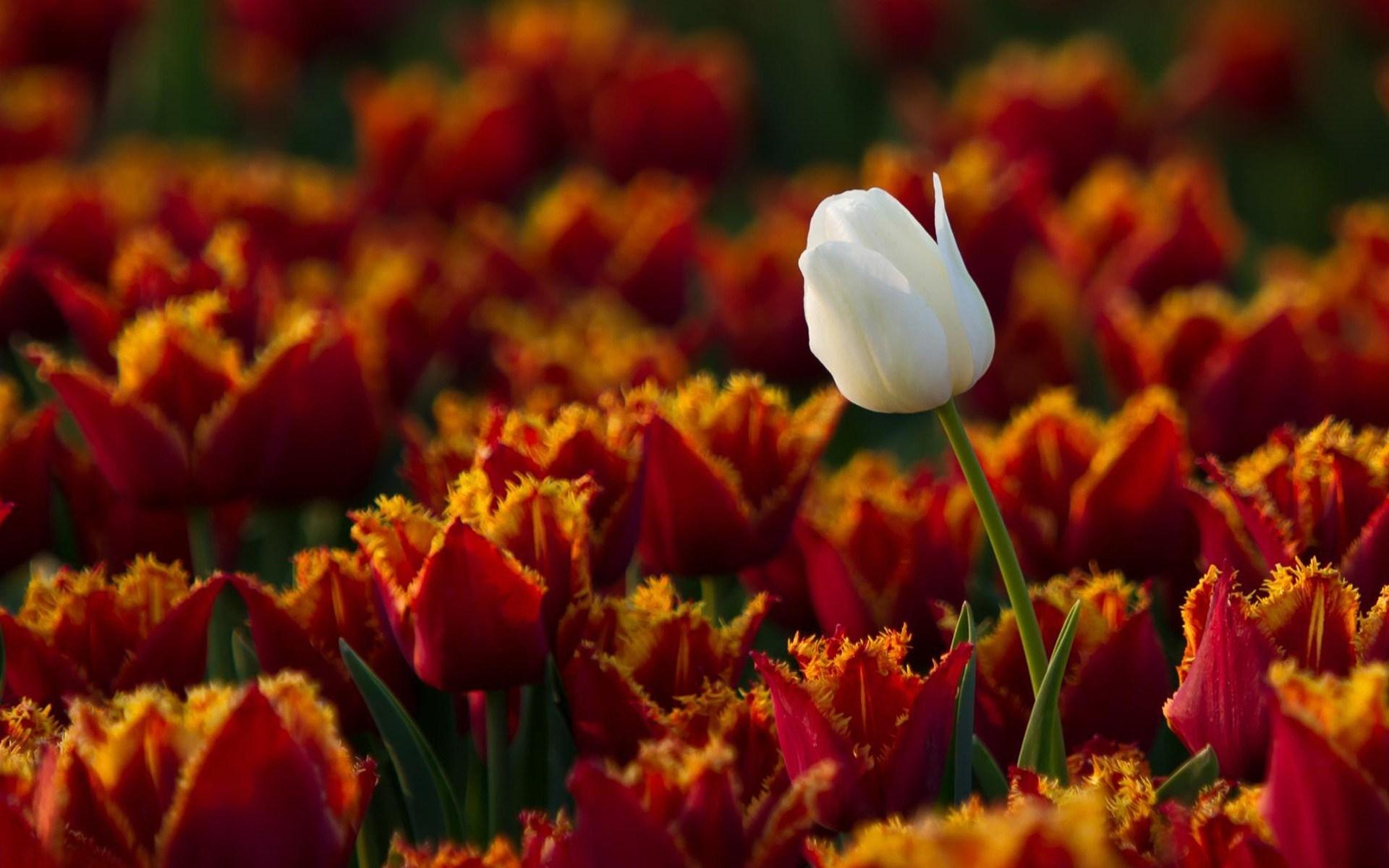 amazing flowers photo