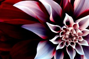 amazing flowers pictures