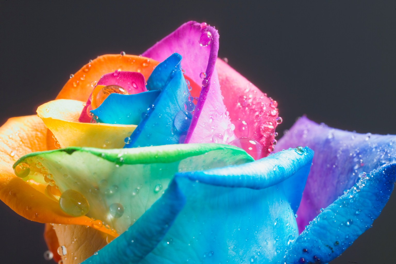 amazing flowers rainbow
