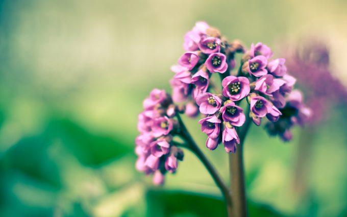 amazing flowers spring