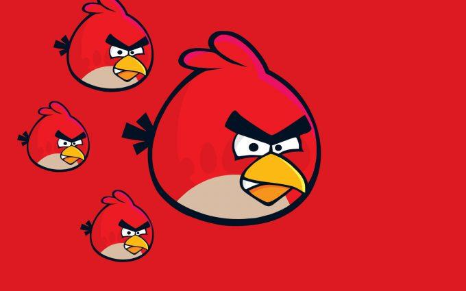 angry bird hd wallpaper