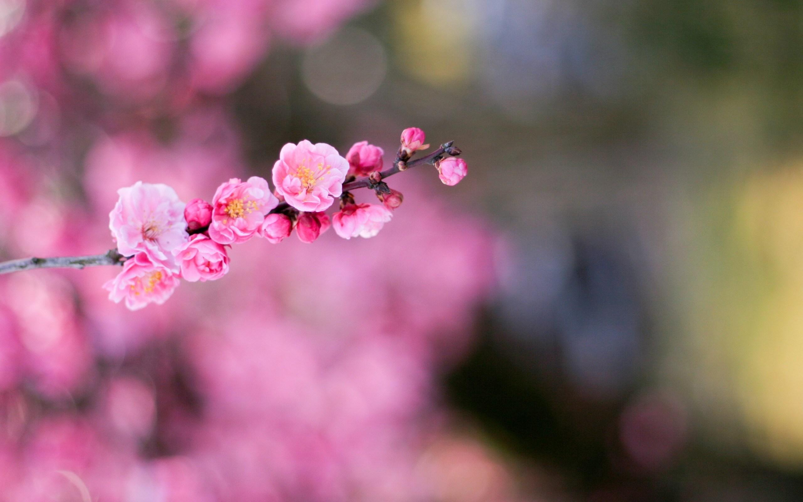 apricot flowers bokeh