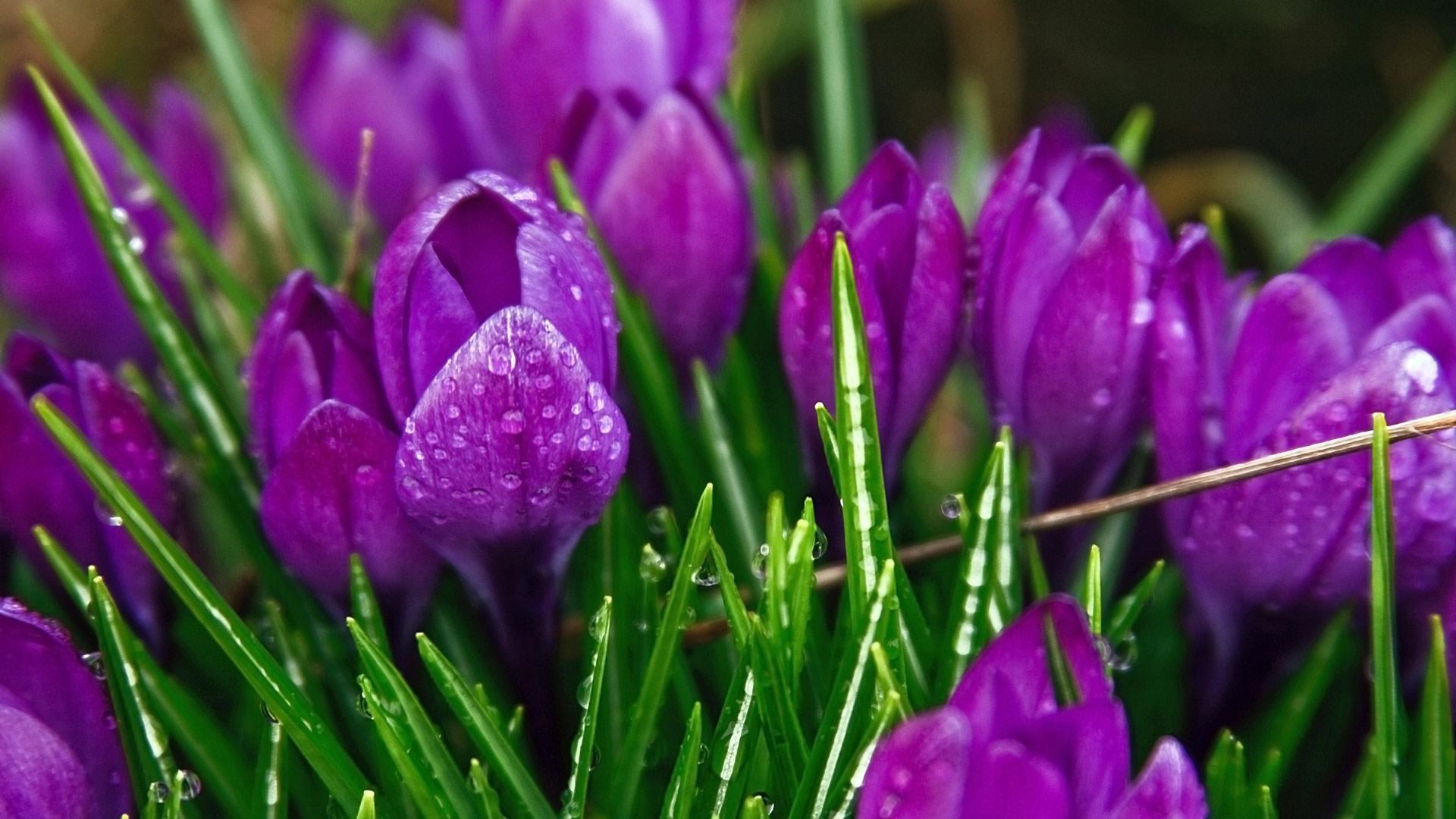 beautiful flower A6