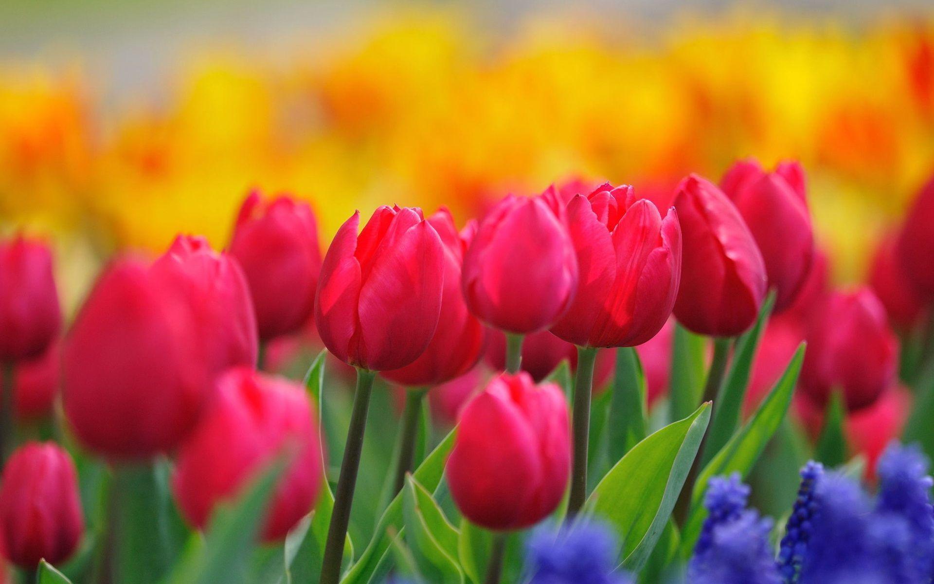 beautiful flower bright