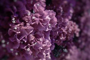 beautiful flower exotic