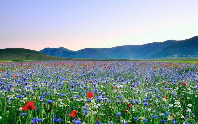 beautiful flower meadow