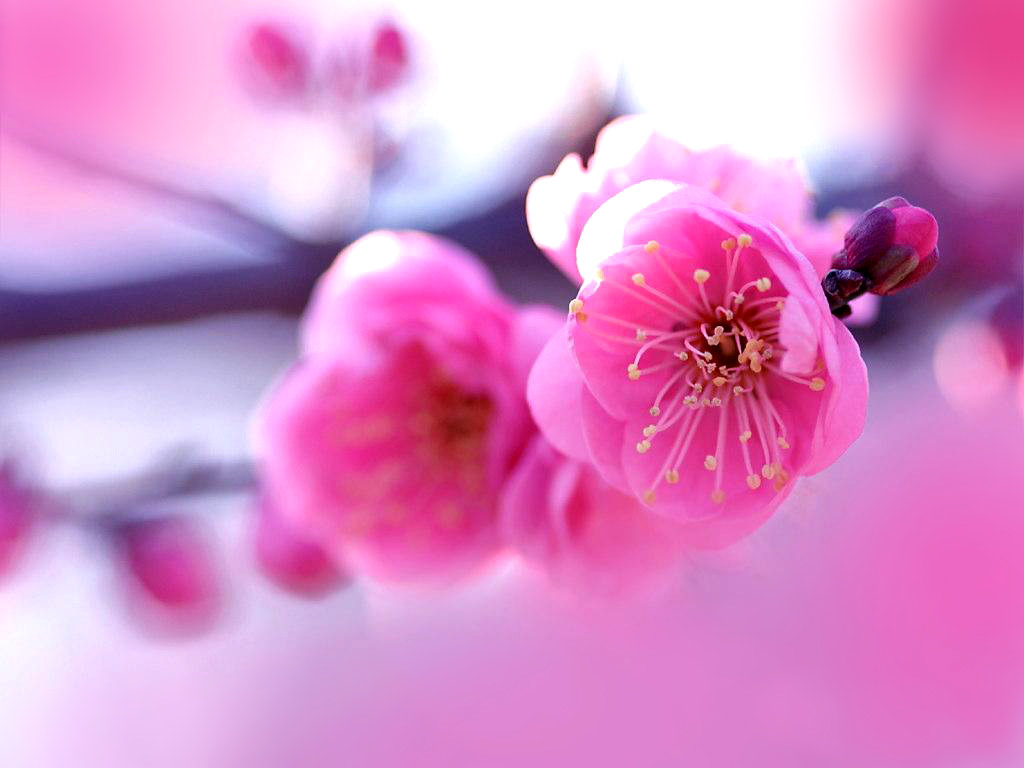 beautiful flower pictures A3 - HD Desktop Wallpapers | 4k HD