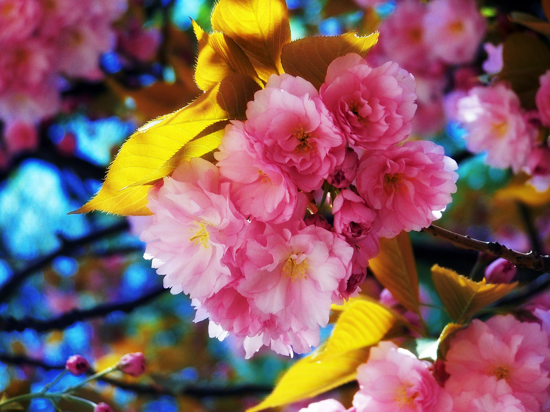 beautiful background pictures flowers