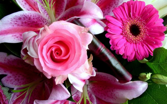 beautiful flower pictures A7