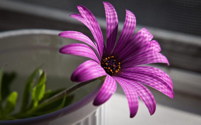beautiful flower purple
