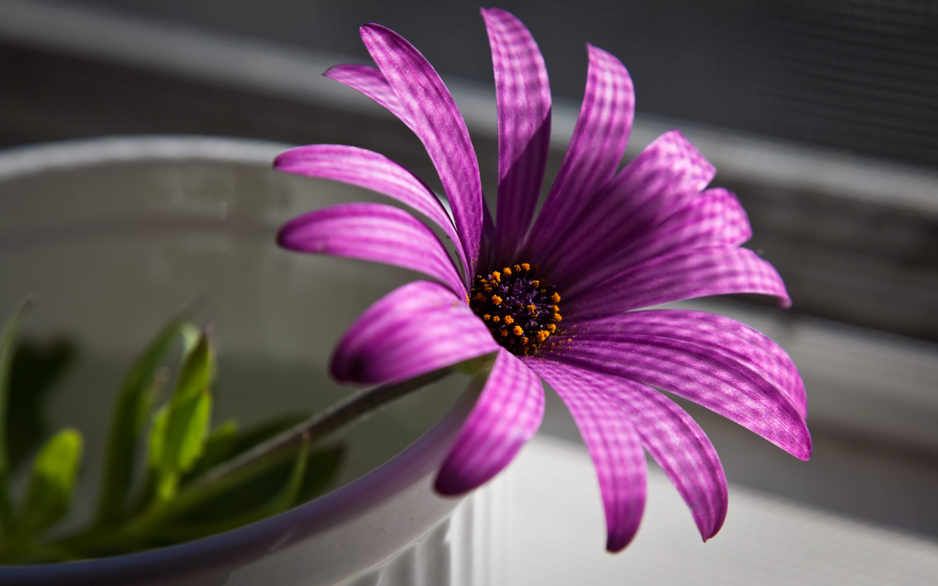 beautiful flower purple