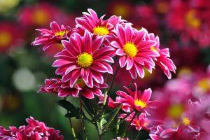 beautiful flowers A1
