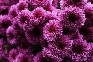 beautiful flowers A2
