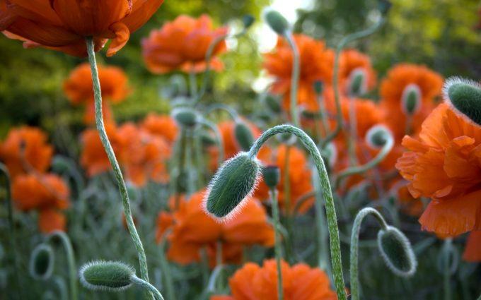 beautiful flowers A3