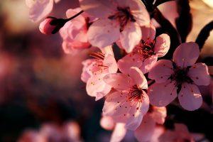 beautiful flowers A4