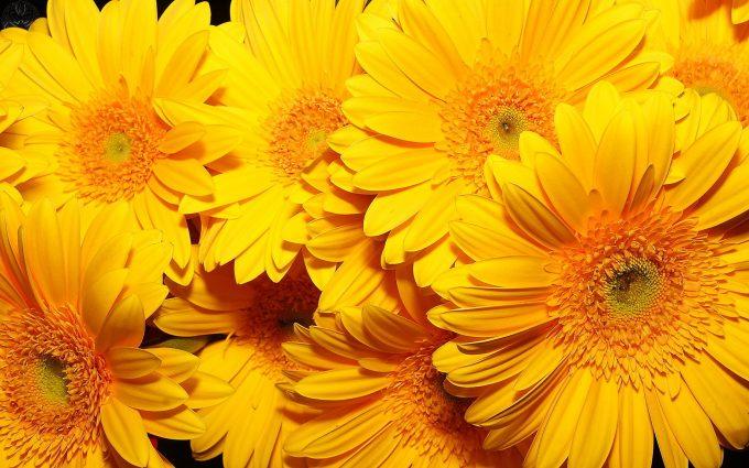 beautiful flowers A6 yellow