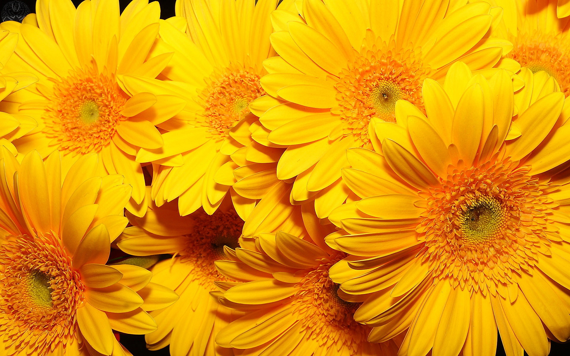 beautiful flowers A6 yellow