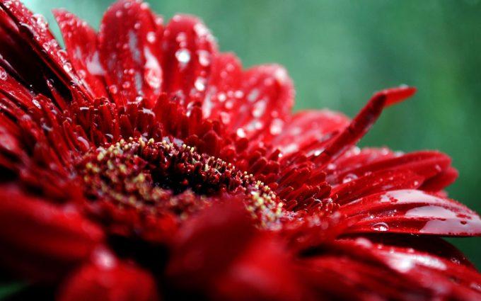 beautiful flowers A8