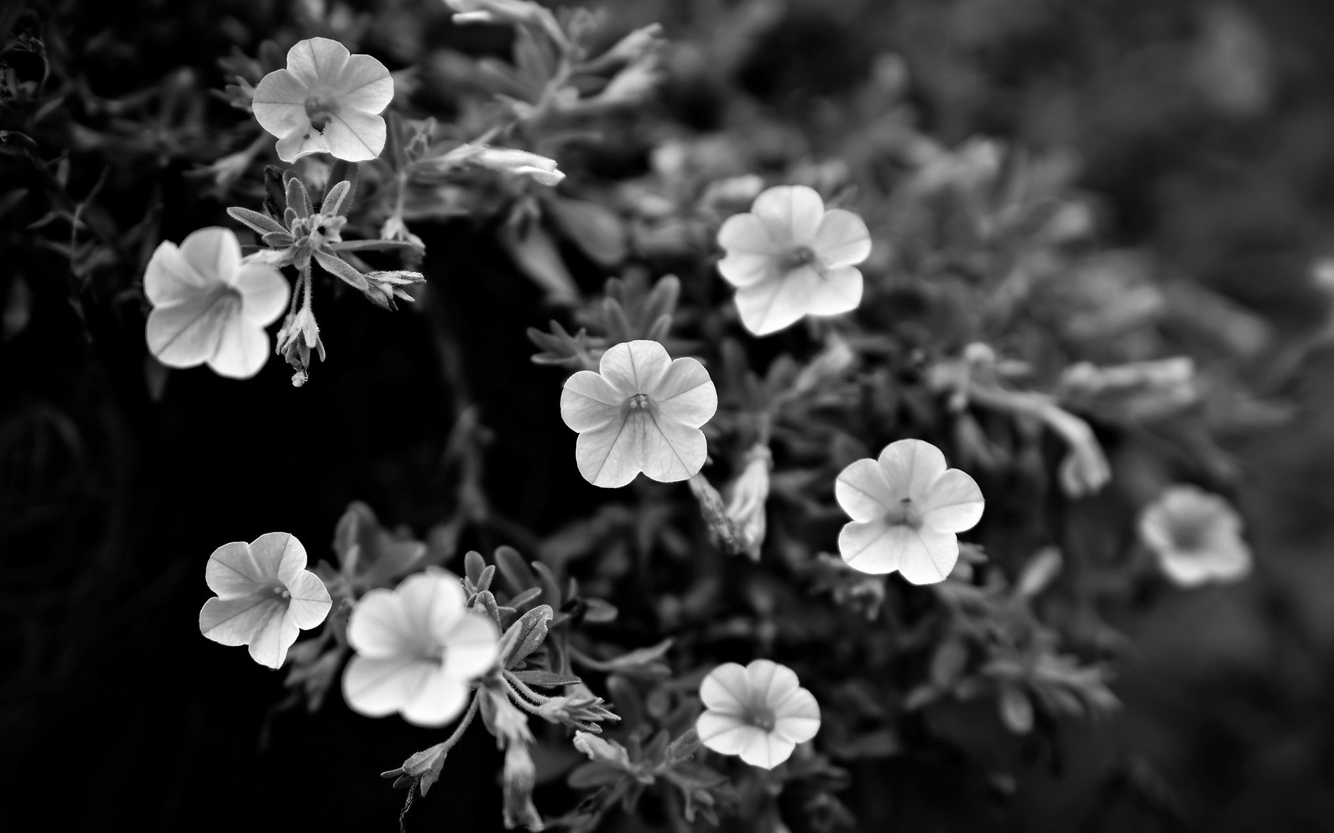 beautiful flowers grayscale