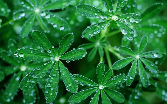 beautiful flowers green