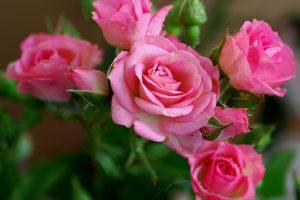 beautiful flowers hd fuchsia