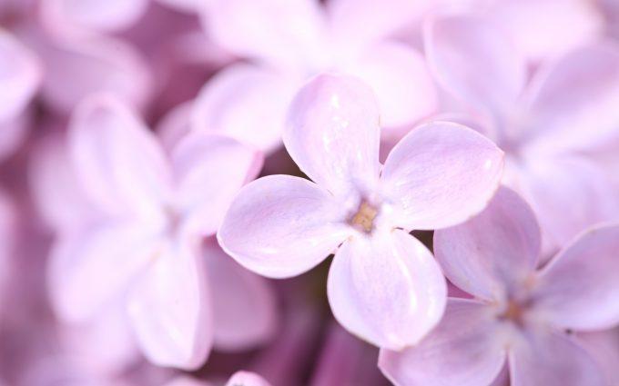 beautiful flowers hd petals