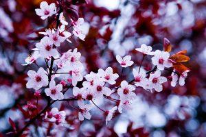 beautiful flowers hd tumblr