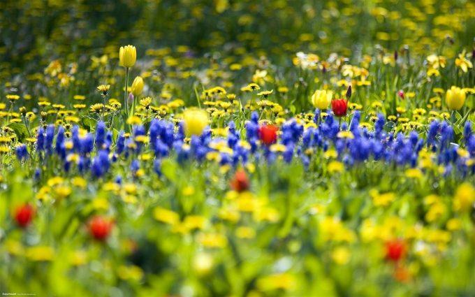 beautiful flowers hd wild