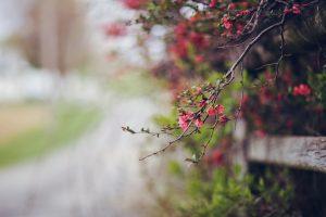 beautiful flowers macro