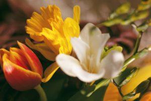 beautiful flowers mix