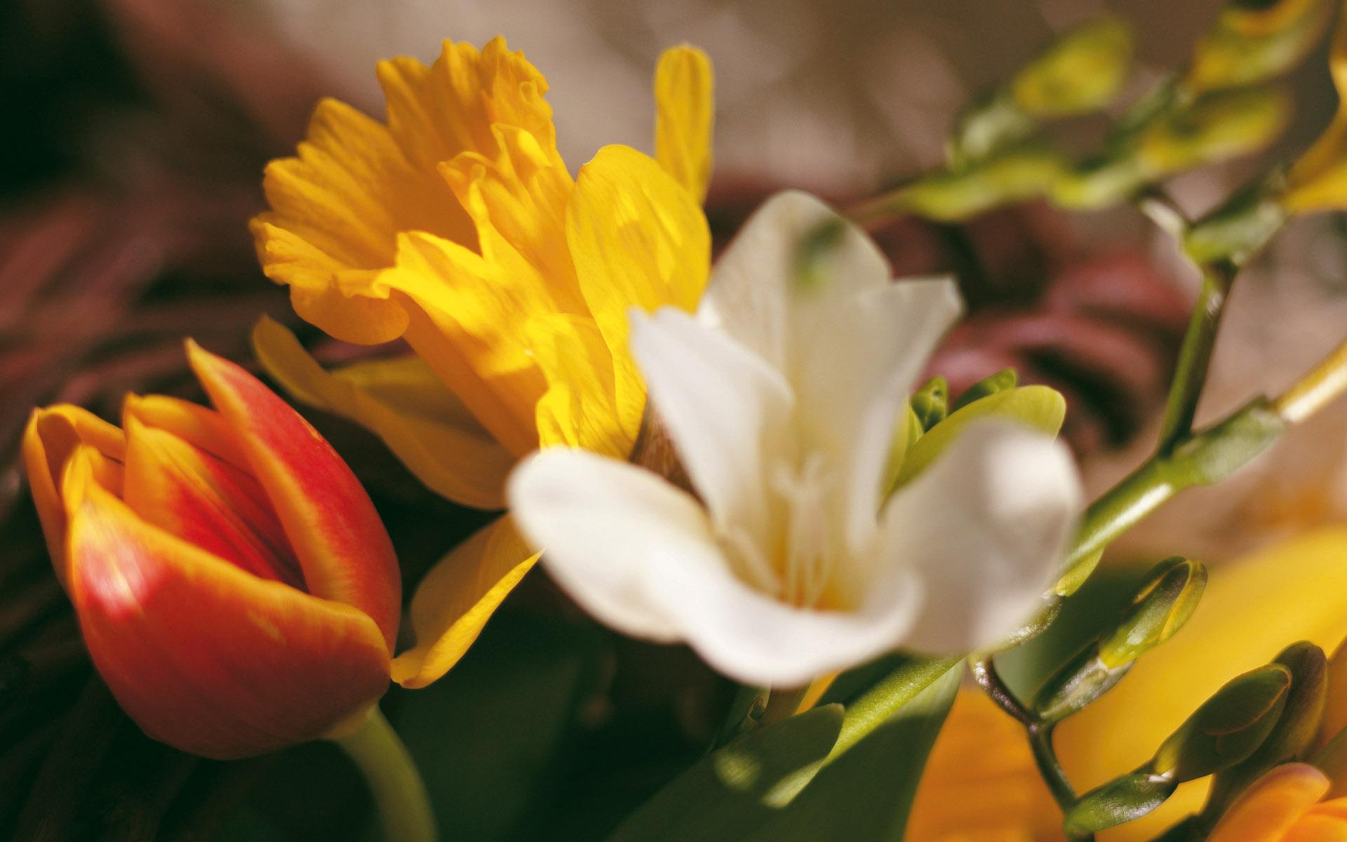 Beautiful flowers mix hd desktop wallpapers 4k hd timeline izmirmasajfo