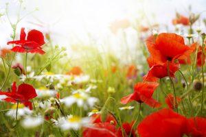 beautiful flowers spring