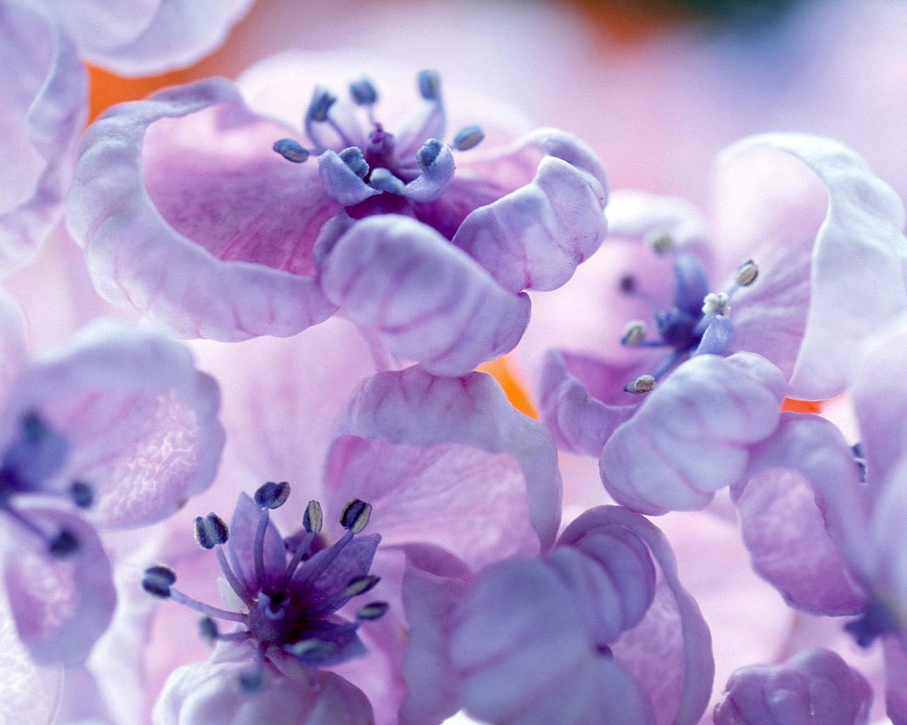 beautiful flowers violet