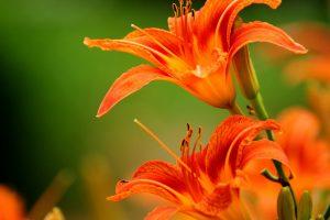 beautiful flowers vivid