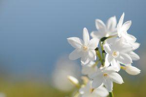 beautiful flowers white 2