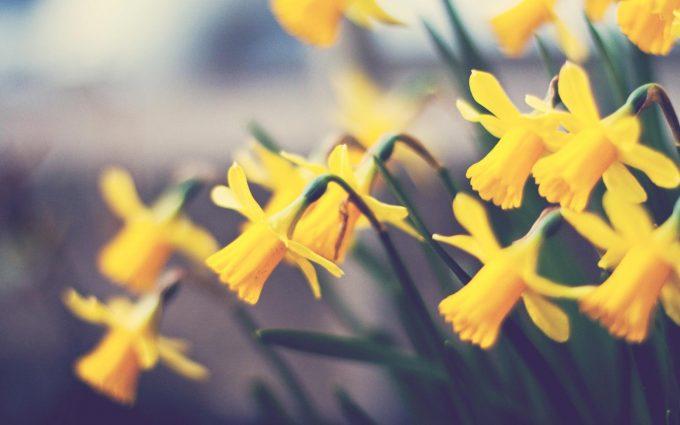 beautiful flowers yellow