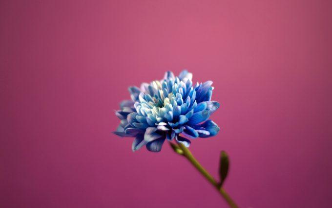 beautiful macro flowers wallpaper