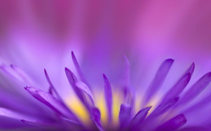 beautiful purple wallpaper