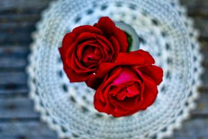 beautiful red rose wallpaper download