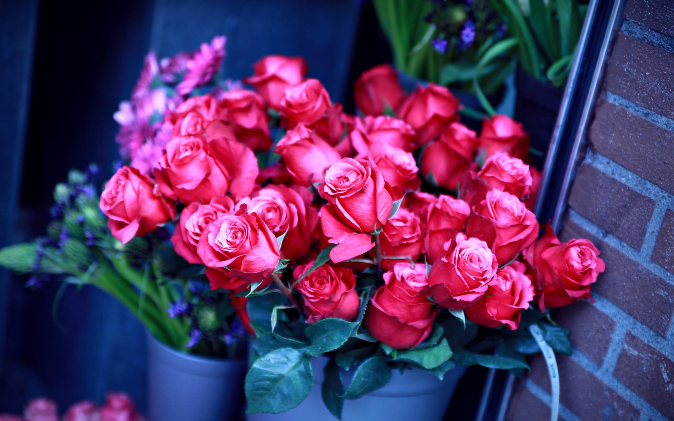 Beautiful Rose Flower Wallpaper Hd Desktop Wallpapers 4k Hd