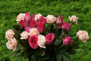 rose bouquet widescreen wallpaper