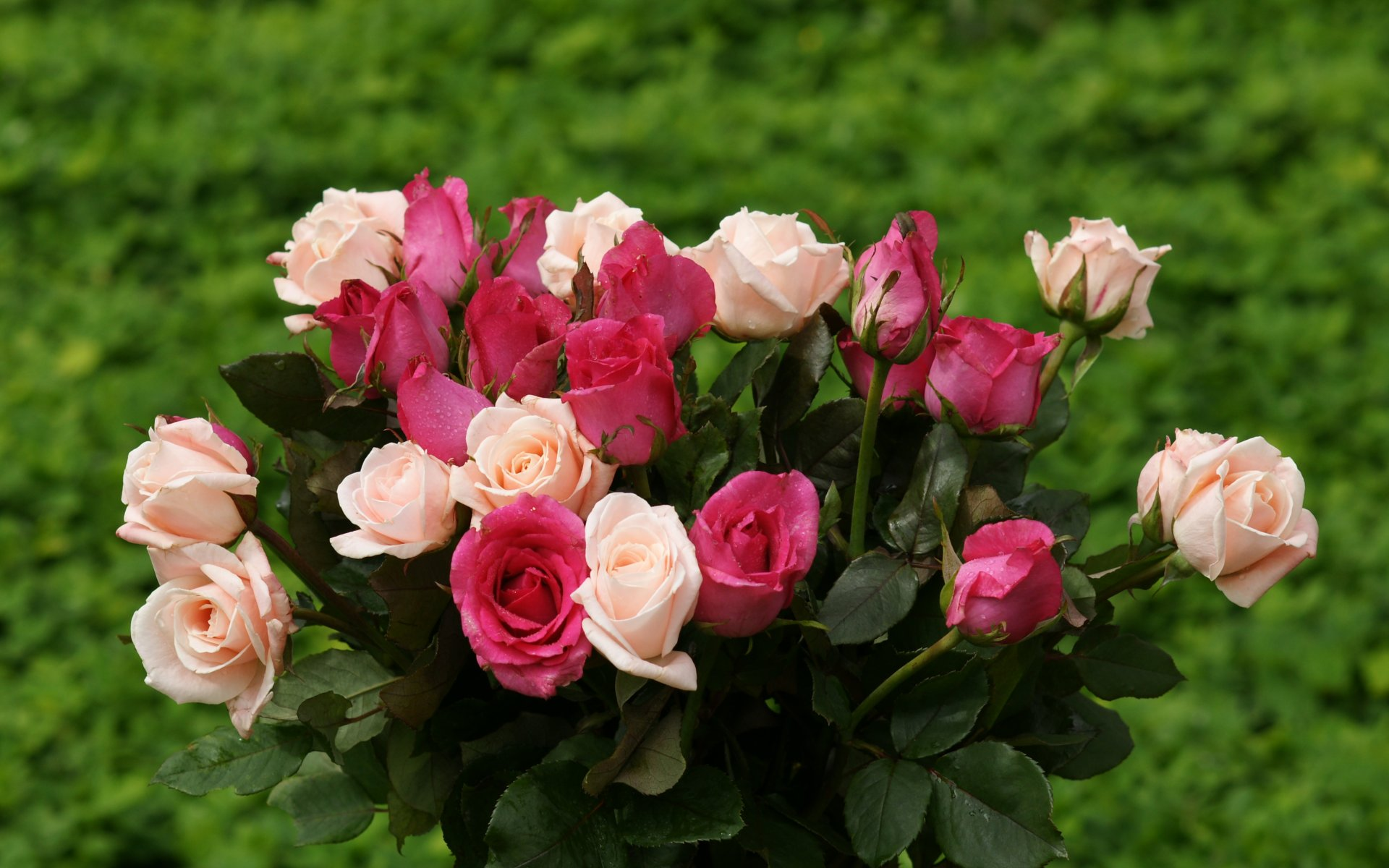 rose bouquet widescreen wallpaper