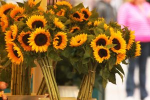beautiful sunflower images