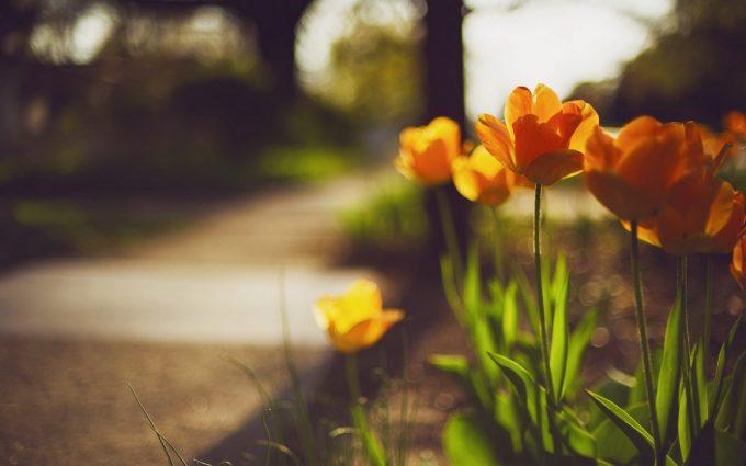 best beautiful flower