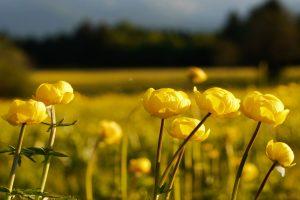 best flowers A2