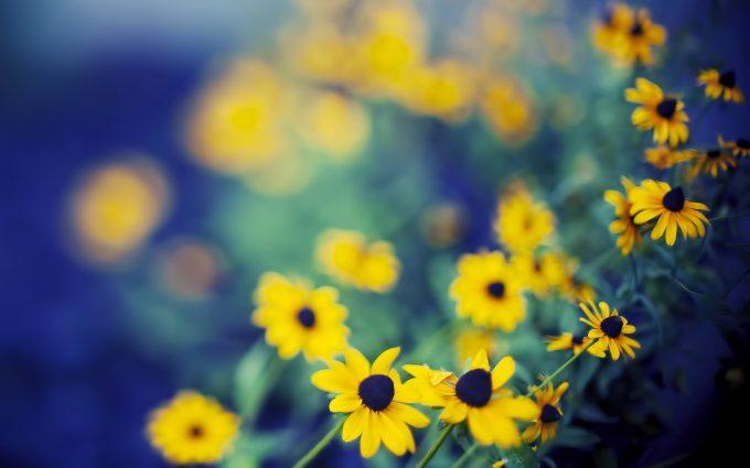 best flowers A3